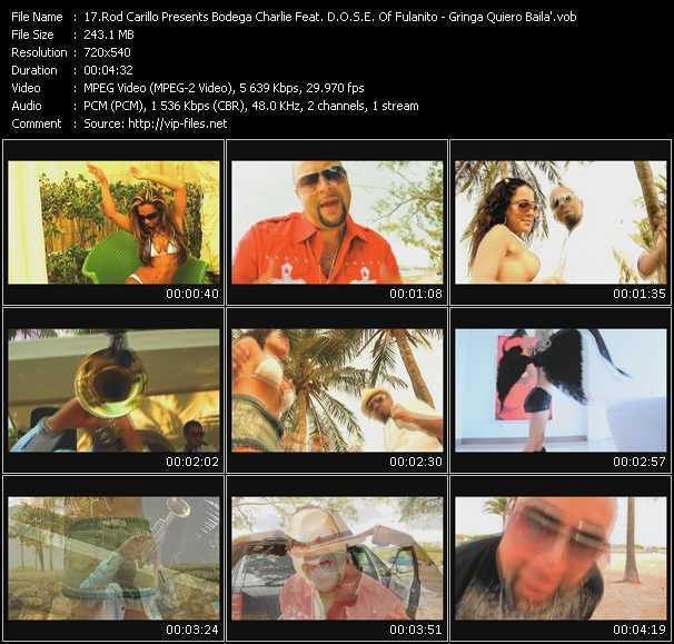 Rod Carrillo Presents Bodega Charlie Feat. D.O.S.E. Of Fulanito - Gringa Quiero Baila'